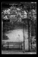 Like a tree in the city by thomas-darktrack