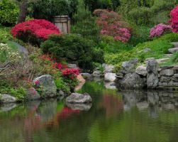 A pond at Japanese House by OL27