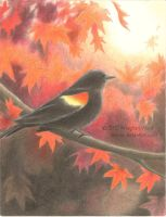 Redwing's Fall by Saracia