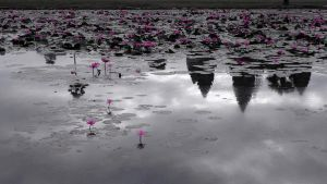 Lily Pond _ angkor wat by vincenzzo