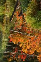 Fall Reflection by tidesend