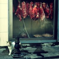 not hungry now by OnurY