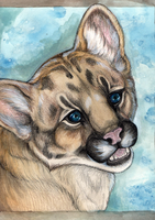Mountain Lion Cub by MorRokko