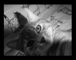 my sweet cat by nanoplatine
