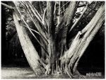 old tree by psychodelic-candy
