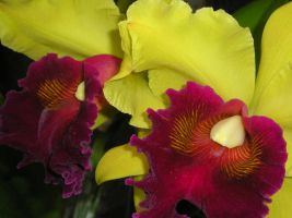 2 Bright Orchids by CASPER1830