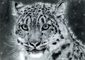 Snow Leopard by muse0107