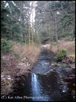Cragside House:Down the stream by McFit
