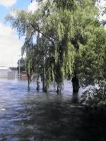 Flooded Willow by Gothicthundra