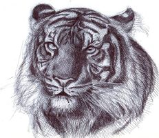 Ballpoint Tiger by Ebbeh