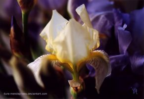 dream of a white lily by ilura-menday-less
