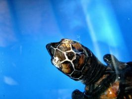 Baby Turtle by jayshree