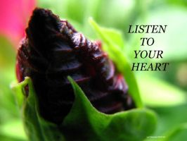 ..Listen To Your Heart... by lyndonovan