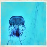 jellyfish at the aquarium by Moon-Willow