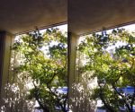 Stereograph - Tree Stars by alanbecker