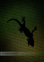 Gecko Silhouette by silenced-revelation