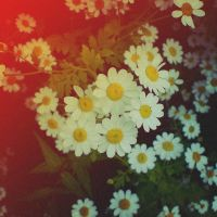 Holga 23 - Urban Daisy by uselessdesires