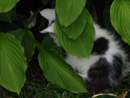 365.004: Kitten Whispers by linderel
