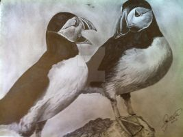 'Puffins' - 2011 - (Drawing) by Stevegillettart
