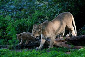 Mom and cub... by Seb-Photos