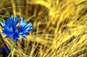 Sunny Blue by ChrisPhotographer