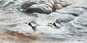 Long-tailed ducks in winter plumage by Renum63