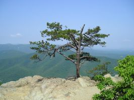 The Tree on the cliff by Rebecca329