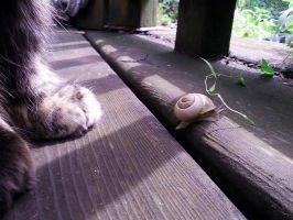 The paw behind Snail's stressfull crossing by Aleayo