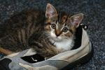 she loves my shoe by Perseus67
