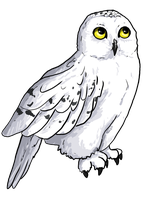 Hedwig by painted-flamingo