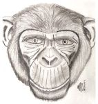 Chimp by adragor