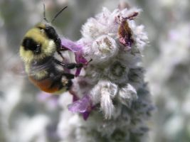who Bee you? I bee me by jazzy
