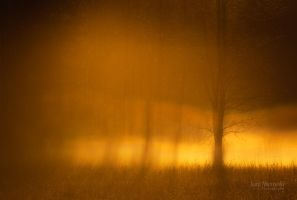 Fog Layers by Nitrok