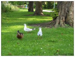 Duck and Seegulls 1 by schnegge1984