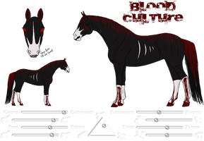 Blood Culture Ref. by Cerulean-Sky-Stables