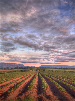 Above the Furrows by wb-skinner