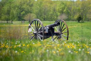 Spring Summer Cannon in field by calebupah