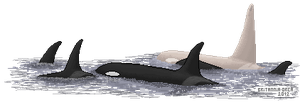 Iceberg and his pod pixel by Britannia-Orca