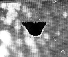 Butterfly by TakingBackSusan