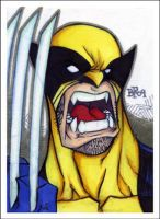 Wolverine sketchcard by Sweatybuffalo