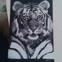 Tiger by harrysgirlxox