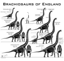 British Brachiosaurs by Paleo-King