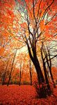 Autumn tree by swiski