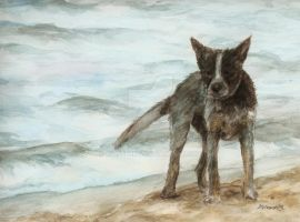 Beached cattle dog by mvisserio4