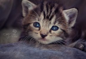 Kitten by CandiceSmithPhoto