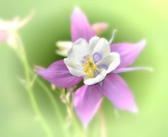 Columbine 1 by jennystokes