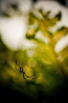 Spider by D3ZTROYA
