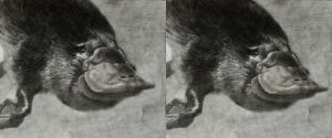 Platypus, Stereoscopic by Blacklemon67