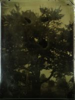 Tin Type Tree by Darkroom-Angel