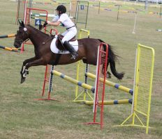 STOCK Showjumping 487 by aussiegal7